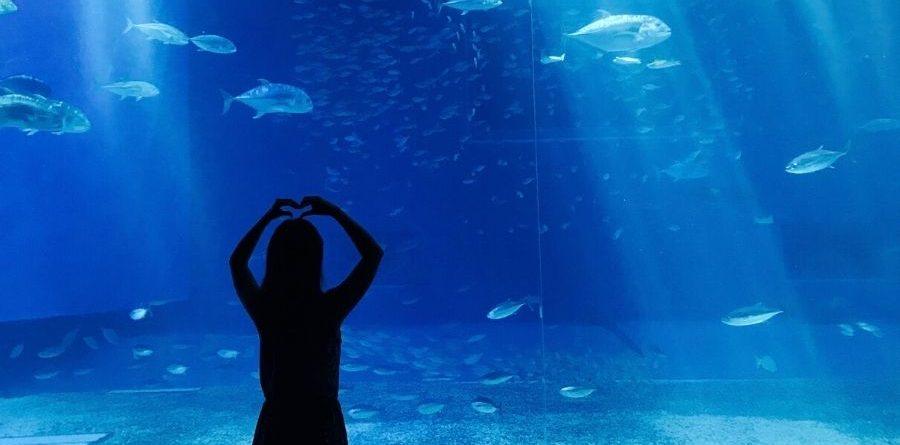 david vann aquari