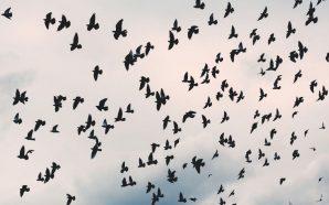 Ànimes que somien volar