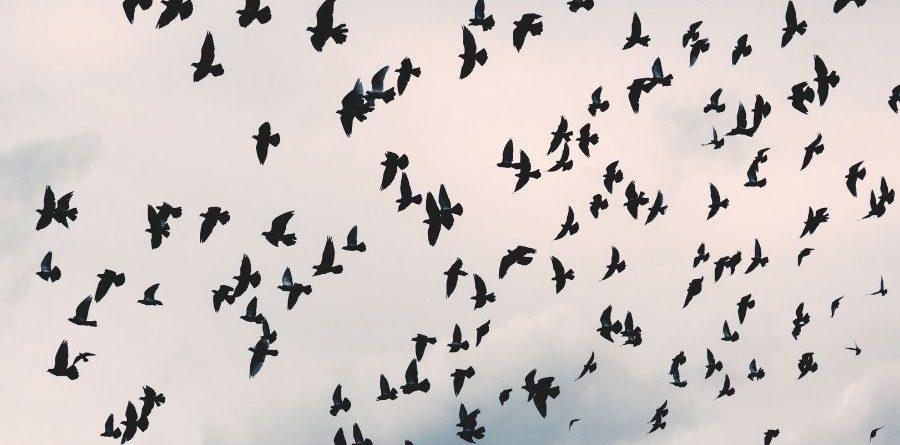 suyos eran los pájaros llibre